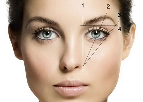 Схема конструирования бровей на лице