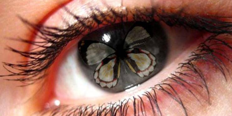 Взмах крыла бабочки