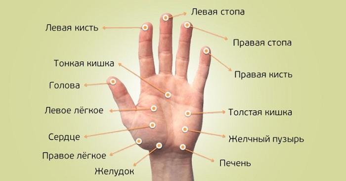Связь пальцев с внутренними органами