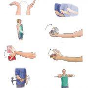 Примеры гимнастических упражнений