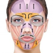Схема работы мышц лица